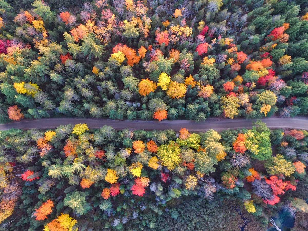 Arial view of colourful autumnal trees